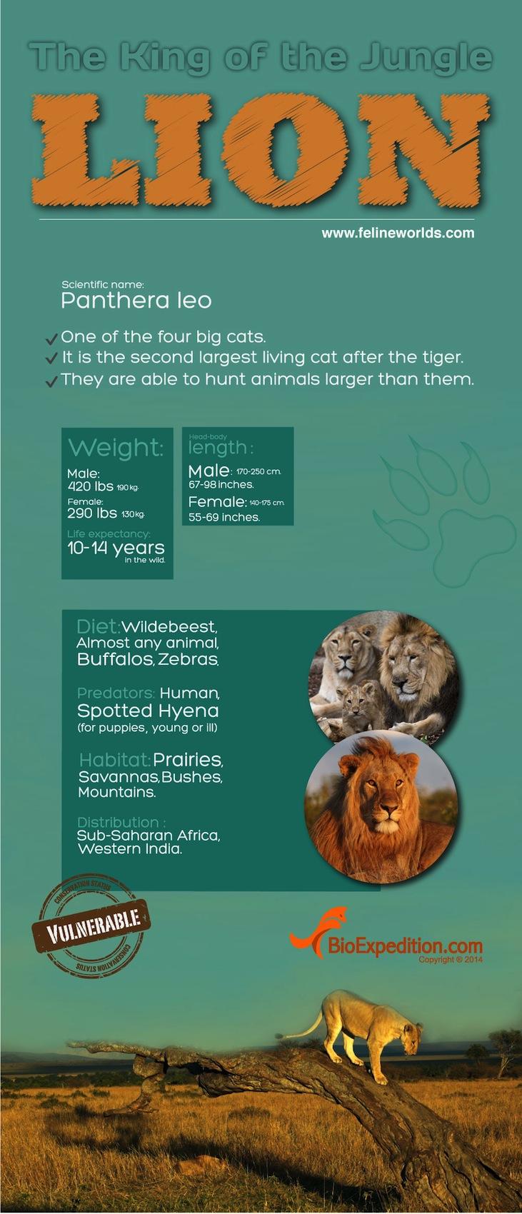 lion 1700