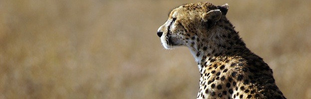 Cheetah Conservation