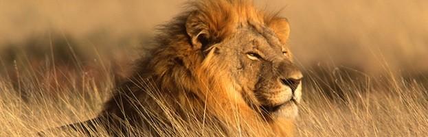 Distribución y Hábitat del León