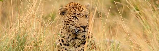 Leopard Information